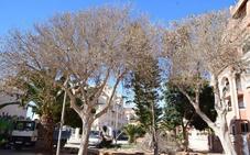 Denuncian el envenenamiento de árboles en la Urbanización para forzar su tala