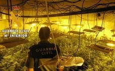 Intervienen más de 1.000 plantas de marihuana en dos viviendas de Vícar