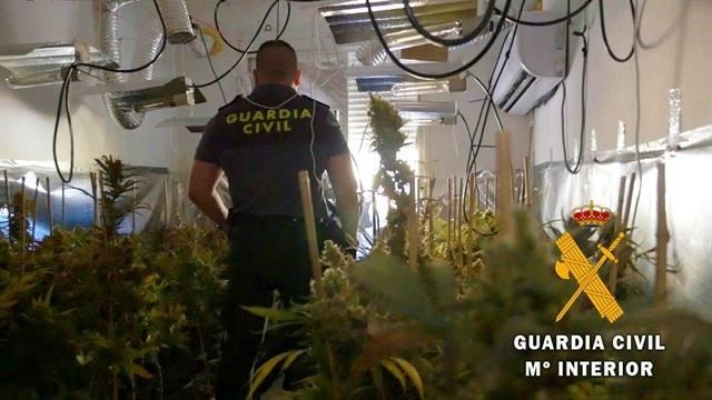 Por el olor, descubren una plantación de marihuana 'indoor' en Roquetas de Mar