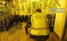 Descubren una plantación de marihuana en una vivienda de lujo de Roquetas