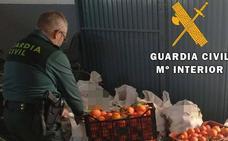 Dos investigados por portar 500 kilogramos de mandarinas sustraídas