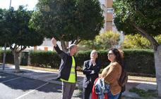 Roquetas explora una nueva metodología de poda individualizada de los árboles