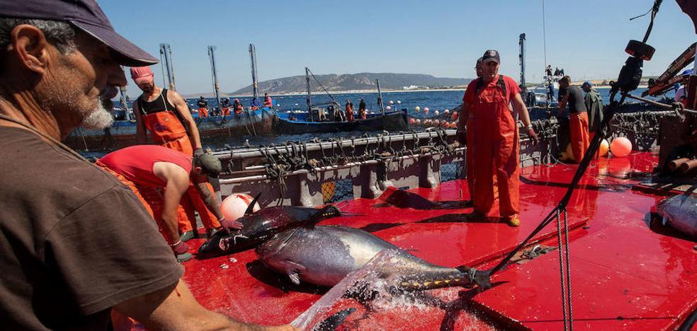 Los puertos de Roquetas y Carboneras serán los únicos que podrán desembarcar atún rojo