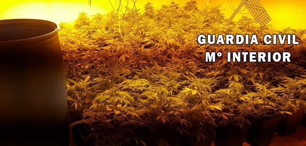 Descubren una plantación de 200 plantas de marihuana cerca de dos centros educativos de Roquetas