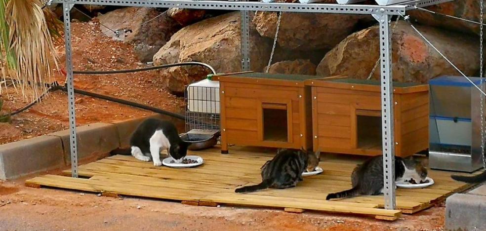 A cuerpo de gato en el Puerto de Aguadulce