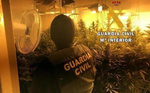 Localizado un cultivo con 232 plantas de marihuana en una vivienda ocupada en Roquetas