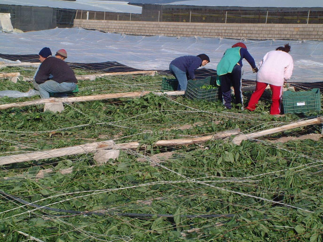 Vox convoca una concentración en Roquetas de Mar «en repulsa» por la agresión a un agricultor
