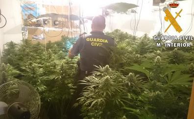 Desmantelado en Roquetas un narco bloque dedicado a la plantación de marihuana