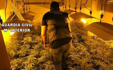 Descubren una plantación de marihuana en El Parador al denunciar los vecinos un «insoportable» olor