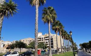 Roquetas de Mar tratará más de 4.000 palmeras contra el picudo rojo