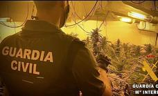 La Guardia Civil desarticula un cultivo indoor con 177 plantas de marihuana en Roquetas