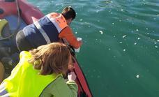 Un estudio de la UAL asegura que la espuma del agua de las playas se genera de forma natural