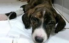 Fallecen cinco de los seis cachorros que fueron encontrados en un contenedor de basura