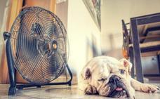 Ventajas del ventilador frente al aire acondicionado que quizá desconocías