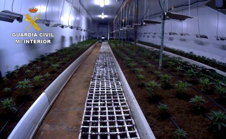Desmantelan la mayor plantación de marihuana de los últmos años en Almería