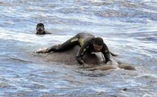 ¿Qué hacía un elefante nadando en el mar a 8 millas de la Costa?