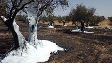 Extinguen un incendio junto a la Ronda de los Olivares