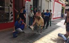 Salva la vida a una cigüeña que cayó tras un golpe de calor