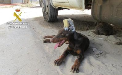 Un hombre le corta las orejas a su perro en Huelva