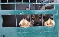 """Diputación exige sacrificio """"cero"""" en el servicio de animales abandonados"""