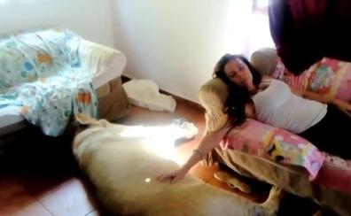 La pareja española que vive con un león de 250 kilos