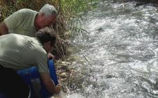 Rescatan a 400 barbos del Guadalbullón