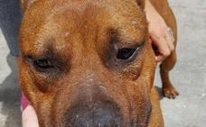 Cerca de medio centenar de dueños de perros 'potencialmente peligrosos' no tenían licencia en Almería