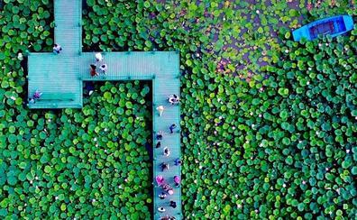 El espectacular jardín en el que renacen las personas