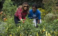 Melania Trump cuida del huerto de Michelle Obama