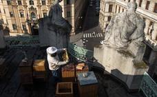Los tejados de Praga se pueblan de abejas para producir miel