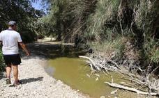 Falta agua para el olivar