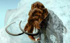 Los mamuts machos caían en trampas naturales por moverse solos