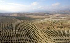 Los diez olivares sin igual en el mundo