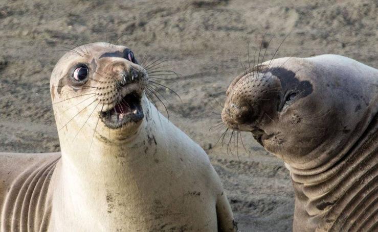 El concurso con las fotografías más cómicas del mundo animal