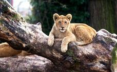 Dos zoológicos piden que se 'donen' mascotas para alimentar a sus animales