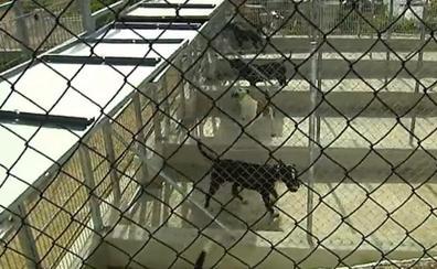 Los perros que mordieron a un niño de 3 años en El Molar no estaban registrados
