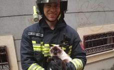 Los bomberos encuentran al dueño de la gata rescatada en Jaén