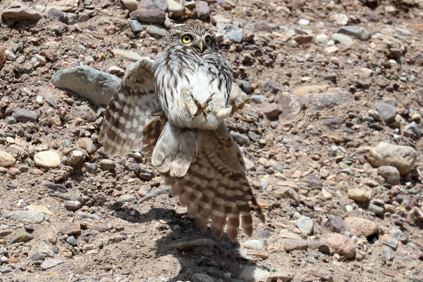 Calendario de las aves del Cabo de Gata