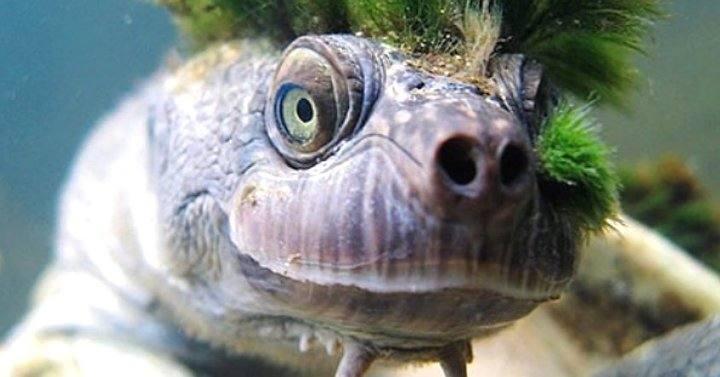Las criaturas más feas y raras pescadas en el mar
