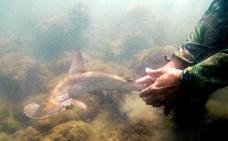 La idílica guardería de tiburones martillo en Galápagos