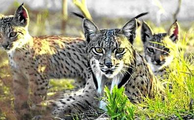Los animales que están a punto de extinguirse por su 'poca fama'