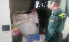 Investigan a 25 individuos por la sustracción de 5.724 kilos de aceituna