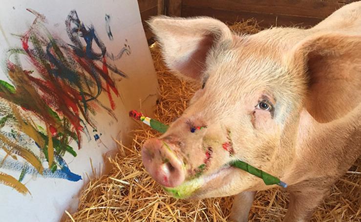 Así es Pigcasso, la cochina que se ha convertido una famosa pintora