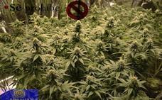 Van a sofocar un incendio y hallan una plantación de marihuana en Los Molinos