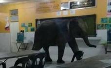 Visita sorpresa: un elefante irrumpe en una escuela de Malasia