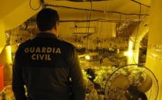 Guerra contra la 'maría' en Granada: 11.000 plantas y 57 detenidos en febrero