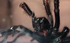 La araña gigante venenosa que puede matarte en 15 minutos