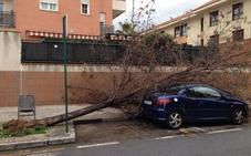 Granada registra un centenar de incidencias causadas por el viento
