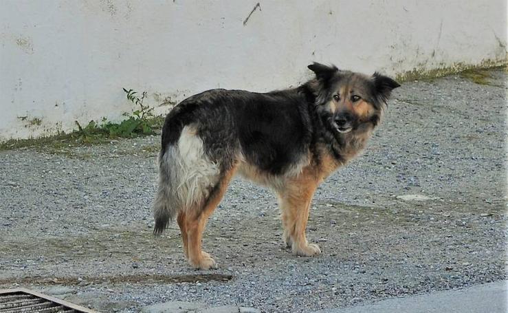 Una perra lleva 10 días en la puerta de un cementerio del Valle de Lecrín