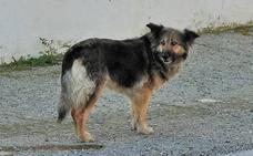 La emotiva historia de una perra que lleva 10 días en la puerta de un cementerio del Valle de Lecrín
